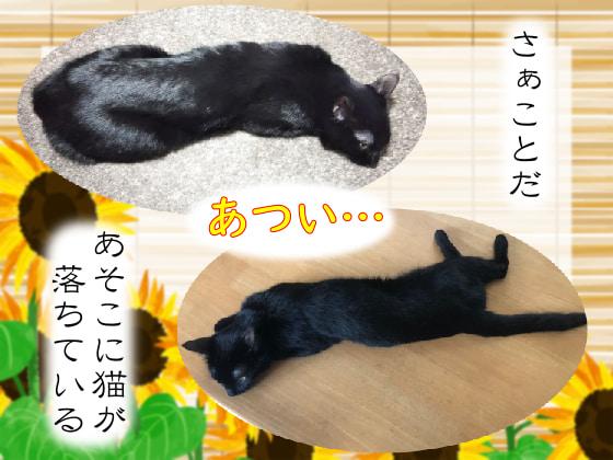 夏に落ちる猫.jpg